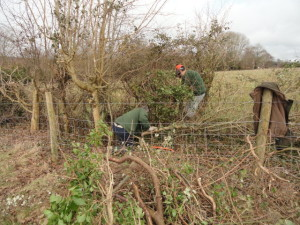 Laying the Hedge