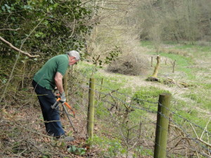 Clearing fence line