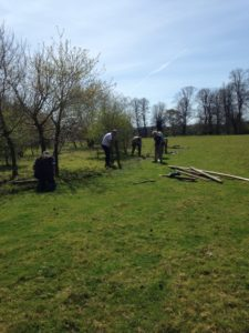 Removing fencing at Chawton