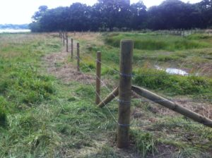 Fencing Pond at Hacketts Marsh