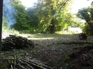 Coppicing Hazel at Chawton