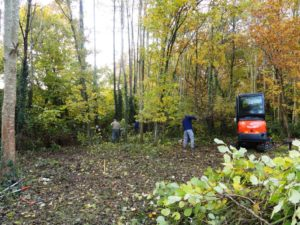 Coppicing at Megan Green